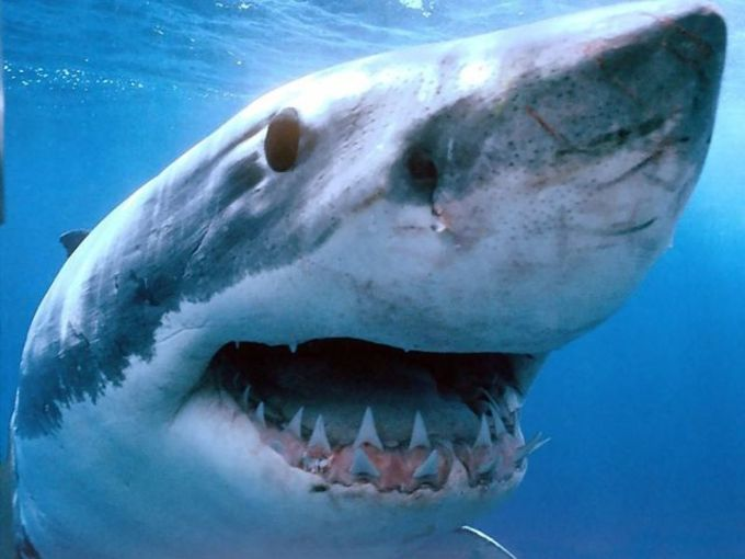Dreadful Sharks Free Screensaver