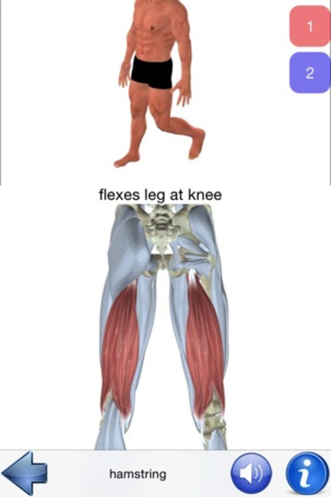 Visual Anatomy