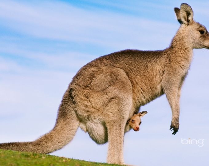 Best of Bing: Australia theme