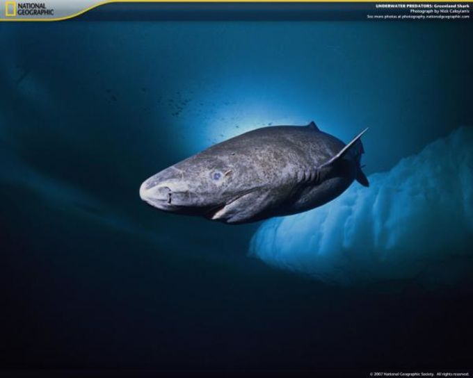 National Geographic Underwater Predators Screensaver