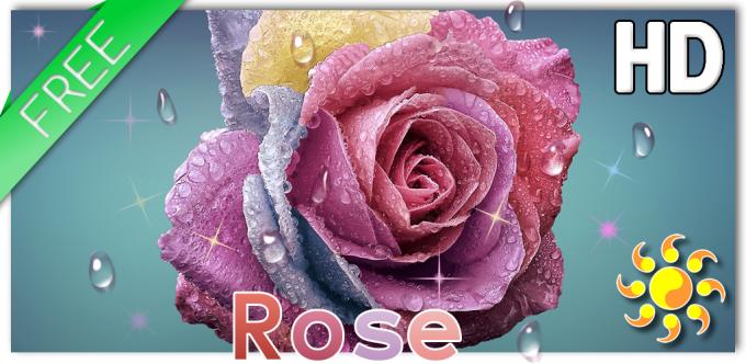 Raindrops Rose Live HD