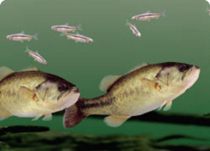 Aquazone Bass Edition