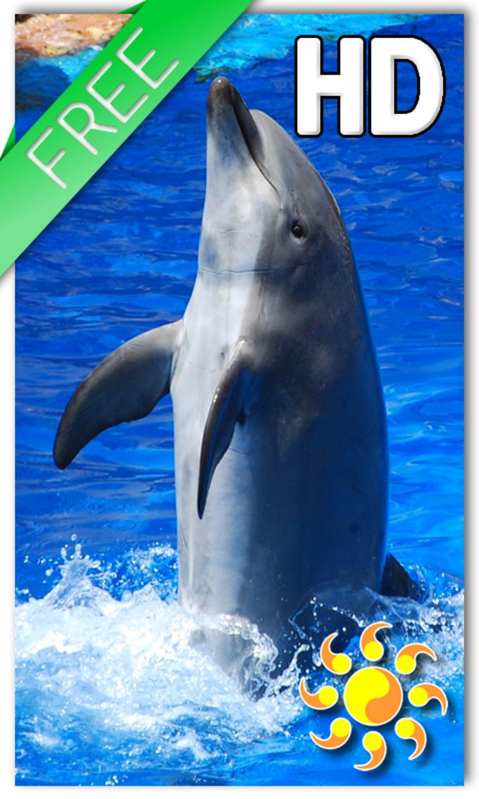 Animal Dolphin Live Wallpaper