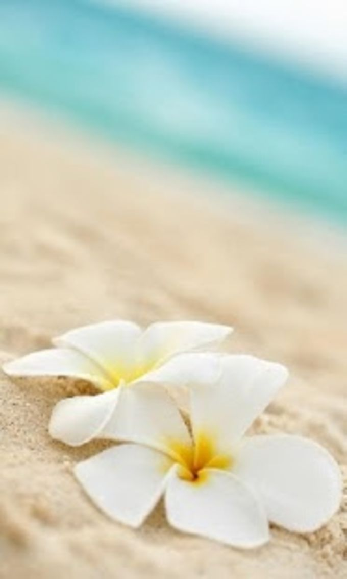 Beach Lilies Lock Screen
