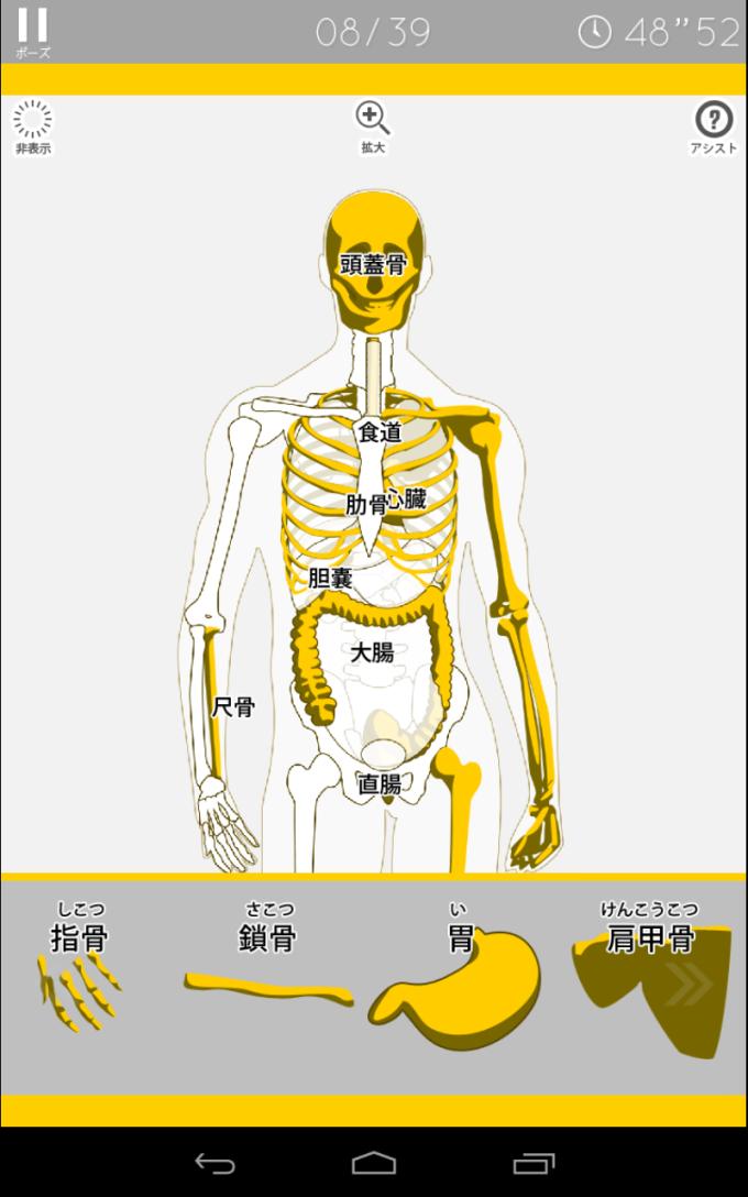あそんでまなべる 人体模型パズル