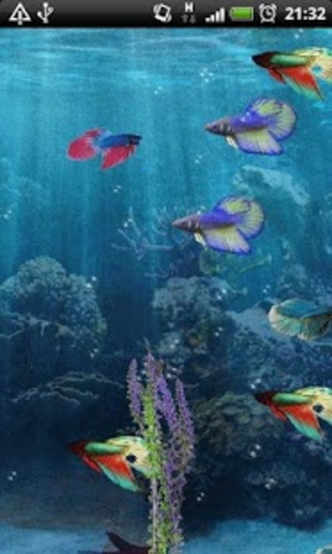 Beta Fish In 3D Live Wallpaper For Android