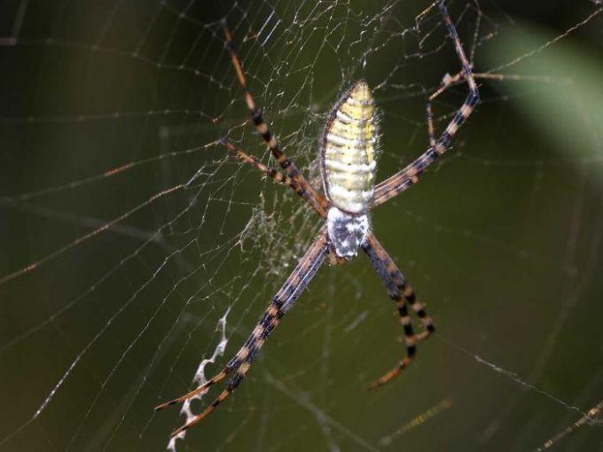 Free Spider Screensaver