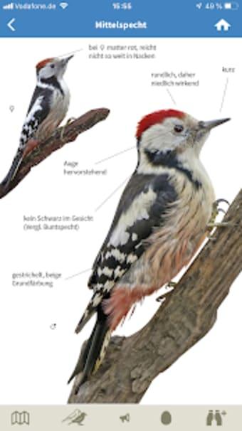NABU Vogelwelt - Vögel Entdecken und Bestimmen