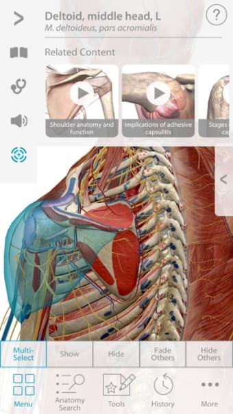 Muscle Premium - Human Anatomy Kinesiology Bones