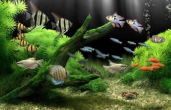 Dream Aquarium Screensaver