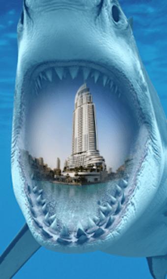 Shark Mouth Frames