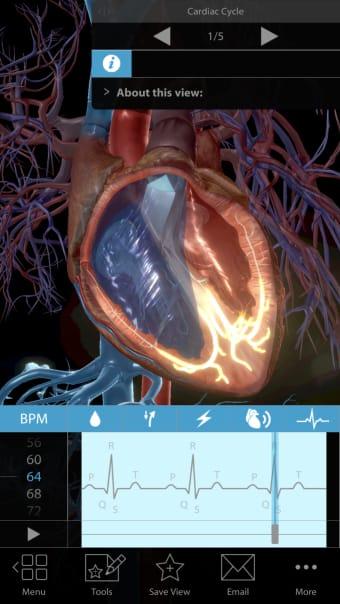 Physiology  Pathology