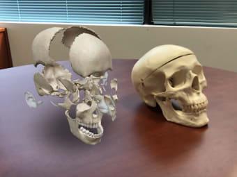 Human Anatomy Atlas 2021:Complete 3D Human Body