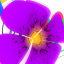 Hana OSX Screensaver