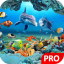 Fish Live Wallpaper 3D Aquarium Background HD :PRO