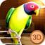 Birdy Pet  Parrot Life Simulator