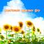 Beautiful Wallpaper Sunflower Summer Sky Theme