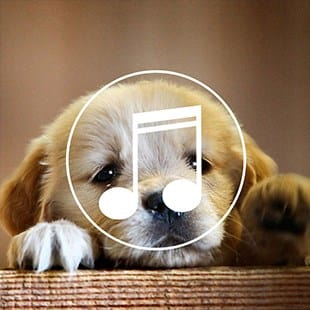 Puppy Sound Dog Spa music-radio Varies with device