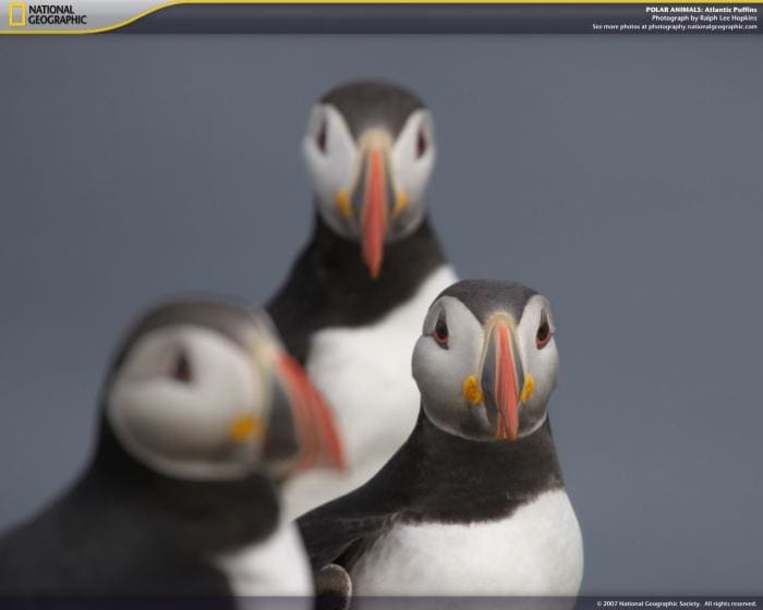 National Geographic Polar Animals Screensaver
