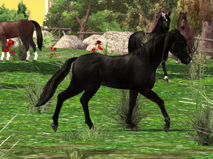 Скачать игру на компьютер horse life