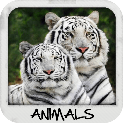 Animal Wallpapers 1