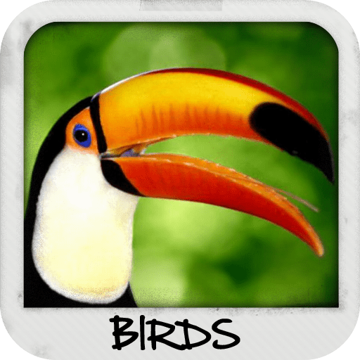 Birds Wallpapers 1