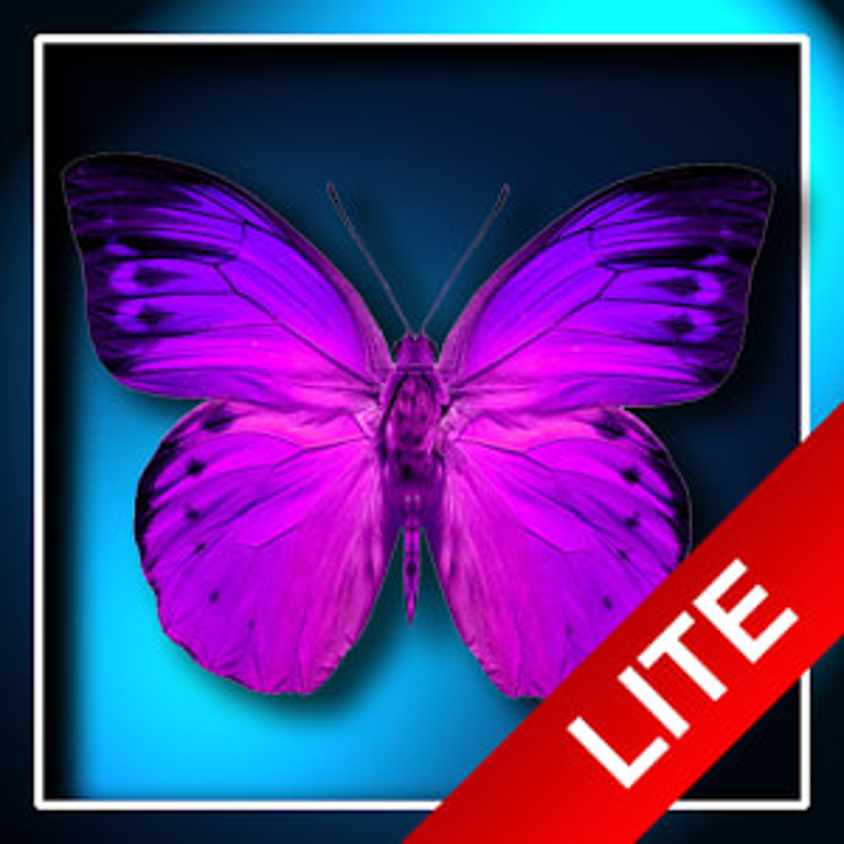 Butterflies LITE LWP 1.3