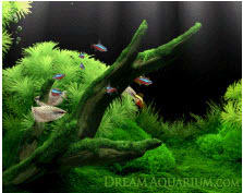 Dream Aquarium Wallpaper