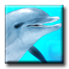 Digifish Dolphin 2