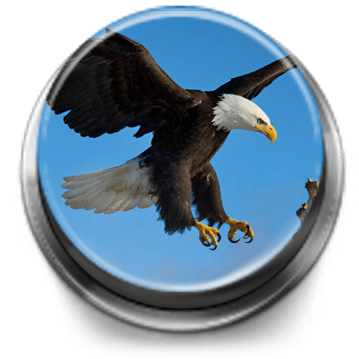 Bird Calls, Sounds & Ringtones 1.2