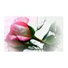 Valentine 5 Theme