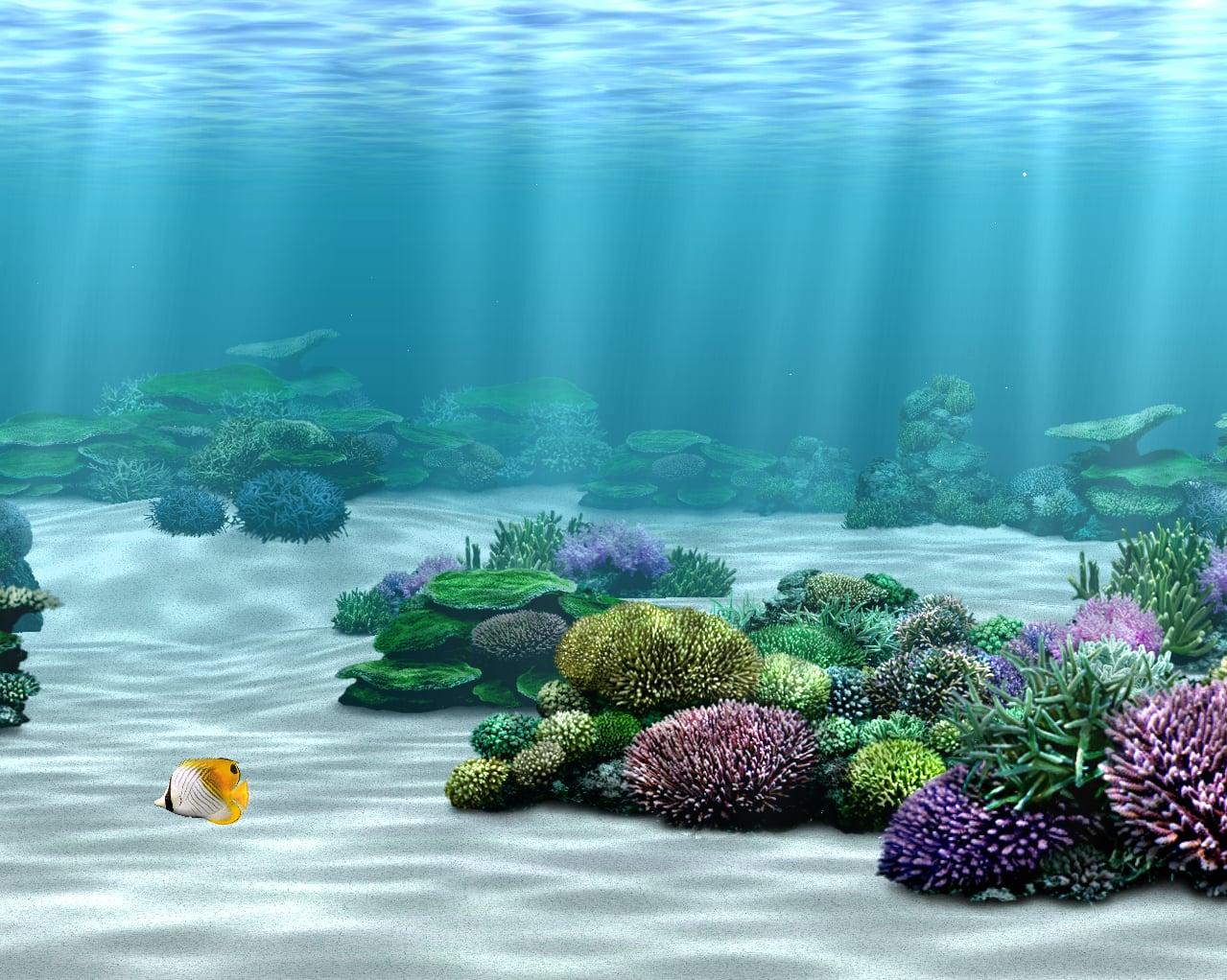 Aquazone 2 - Oceans of the World