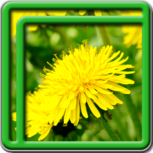 Dandelion Live Wallpapers