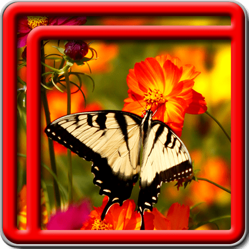 Best Butterfly Live Wallpapers