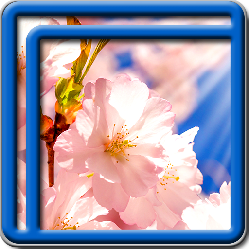 Sakura Tree Live Wallpapers