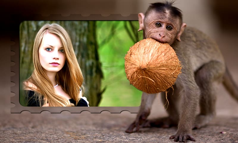 Funny Monkey Photo Frames