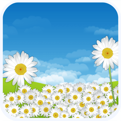 Daisy Flowers Live Wallpaper