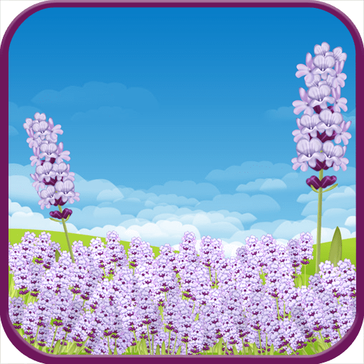 Lavender Field Live Wallpaper