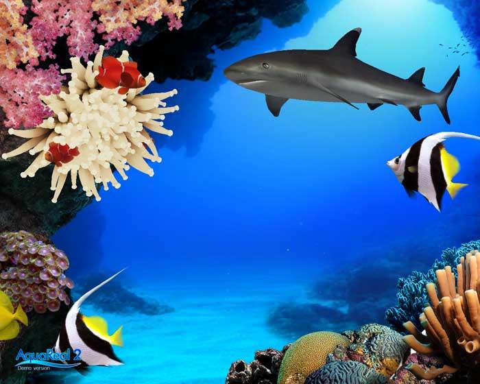 Digifish AquaReal
