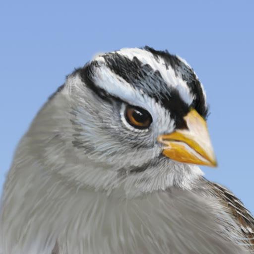 iBird Yard+ Guide to Birds 10.06