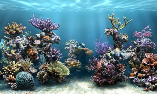 Sim Aquarium Free Tank