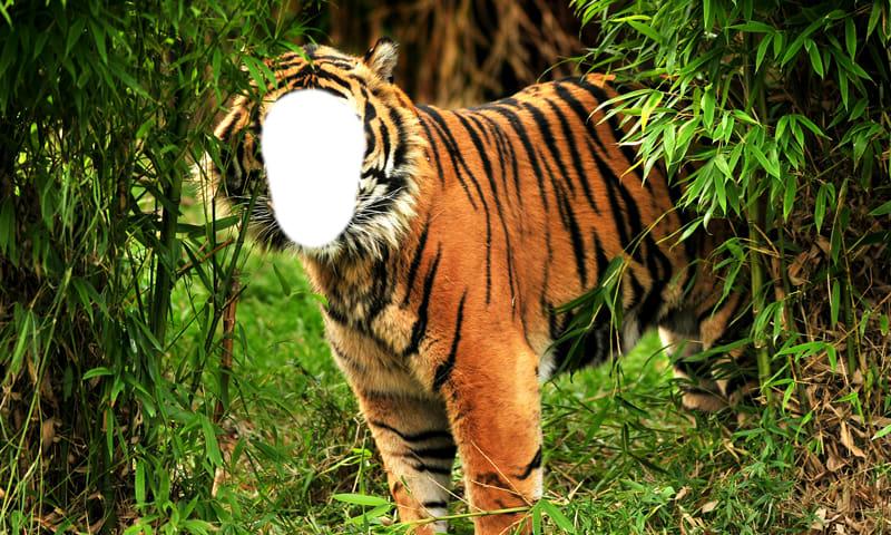 Tiger Photo Montage