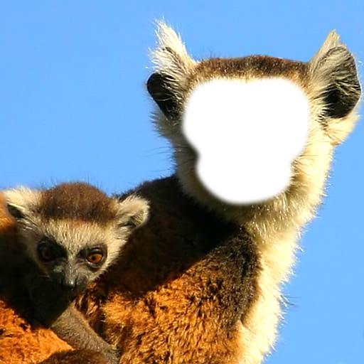 Funny Monkey Photo Montage