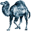 Perl Varies with device