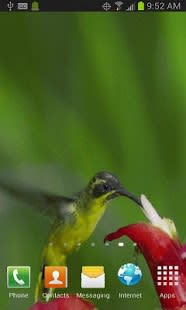 HUMMINGBIRD LIVE WALLPAPER