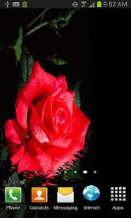 FLOATING RED ROSE LWP