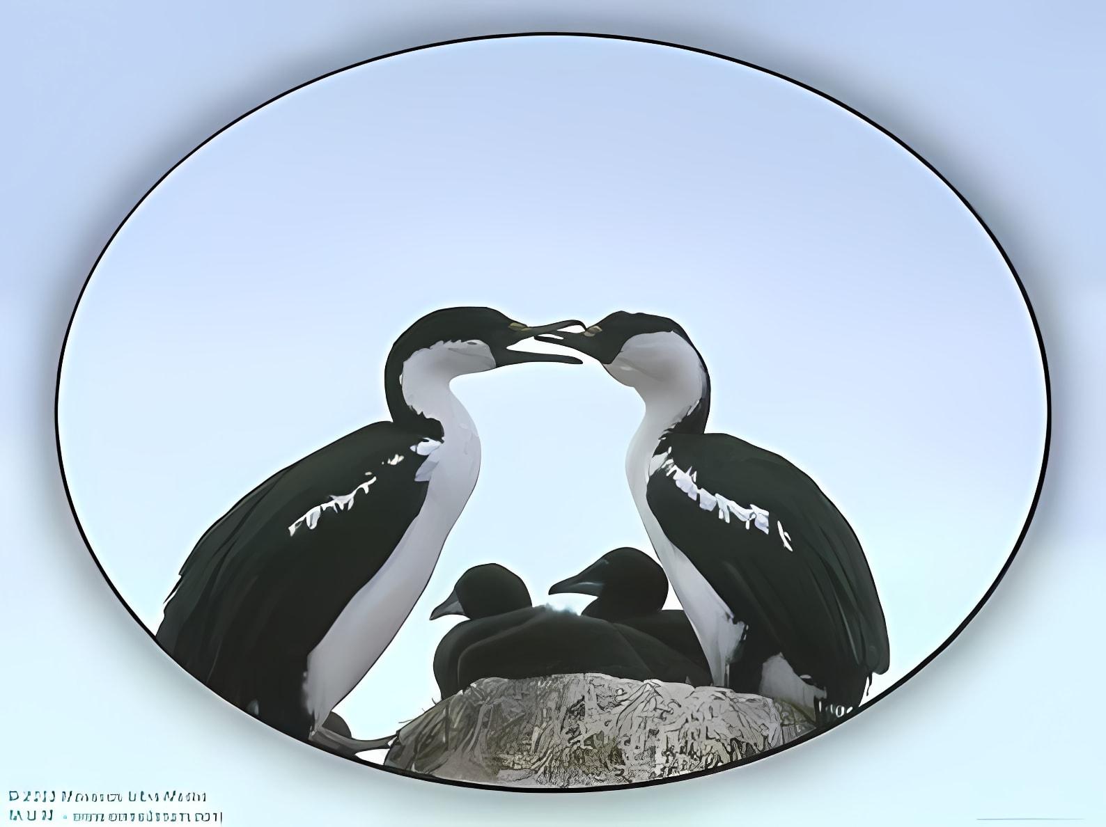 Birds Of Water Screen Saver