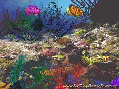 3D Angel Fish Screensaver