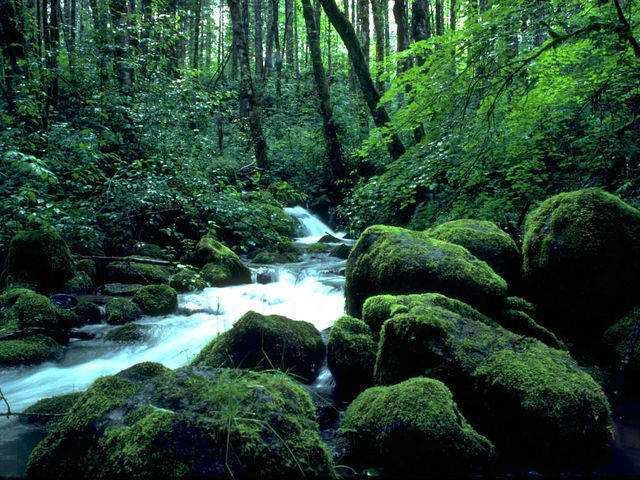 Forest Creeks Free Screensaver