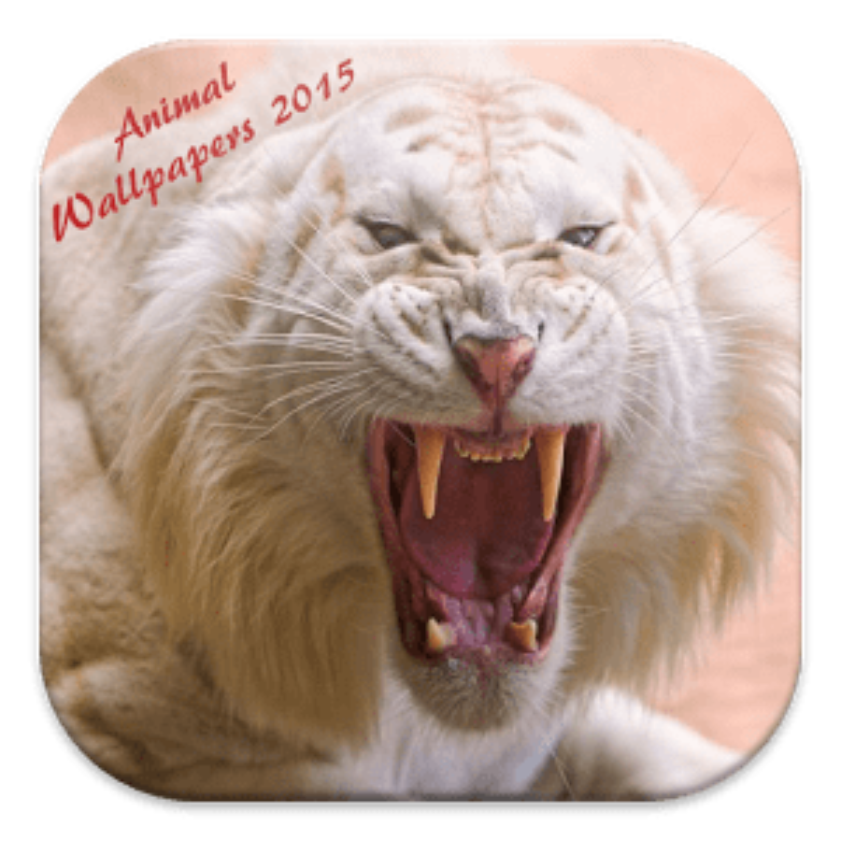 Fondos Animales 2015